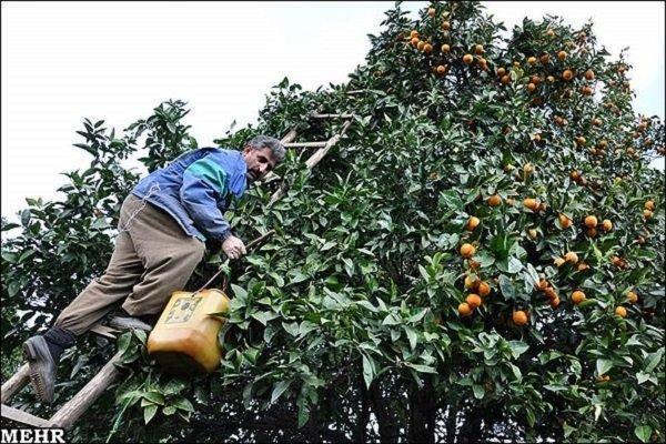 30هزار هکتار از باغهای استان بارور هستند