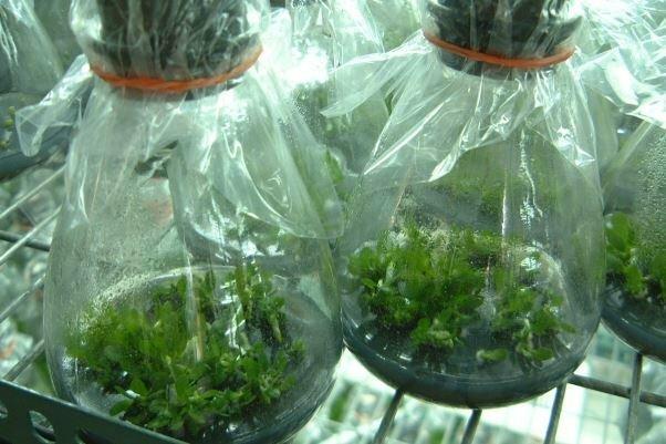 توسعه صنعت جلبک در ایران بازار 500 میلیون دلاری ایجاد می کند
