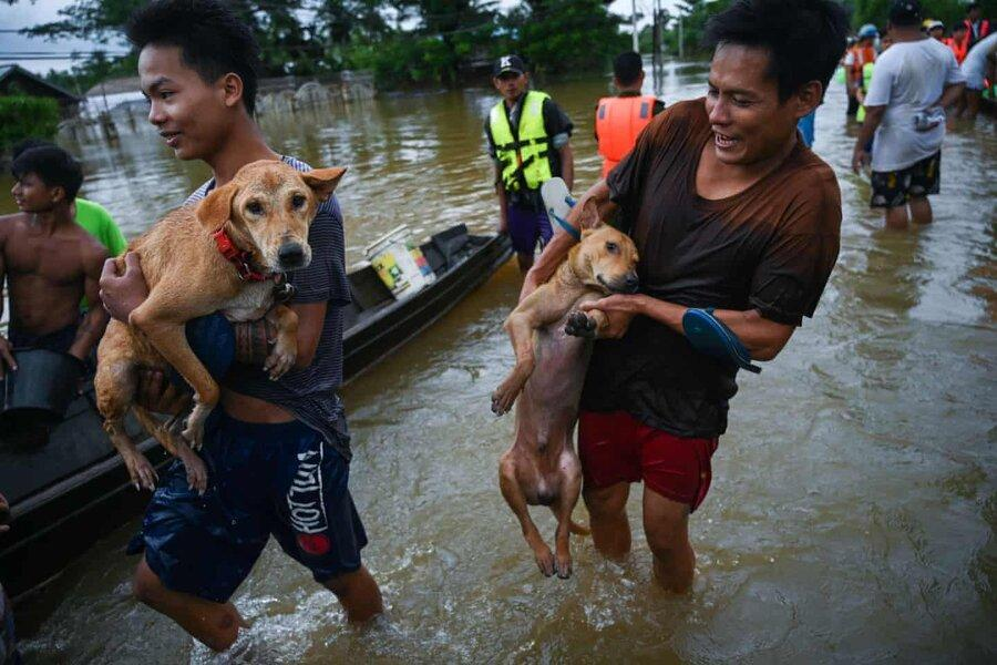 عکس روز: نجات سگ ها