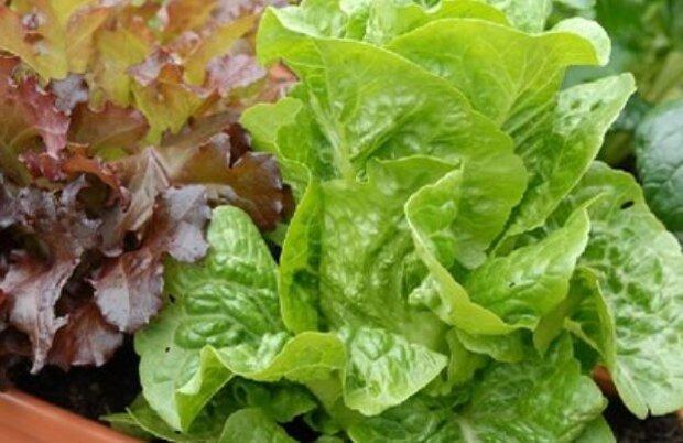 رشد سبزیجات برگی در کارخانه عمودی با مصرف یک درصدی آب
