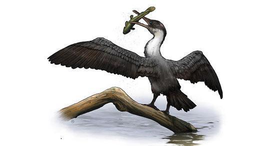 کشف پرنده ماقبل تاریخ قطبی