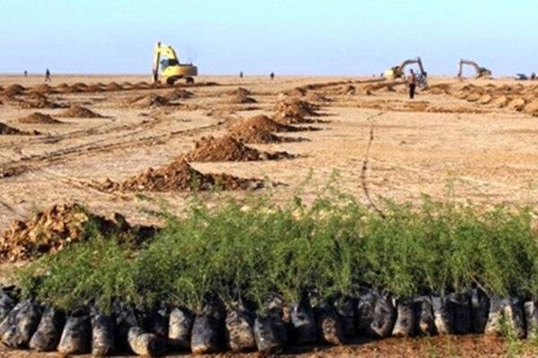 20 هزار هکتار اراضی بیابانی در اشتهارد درختکاری می شود