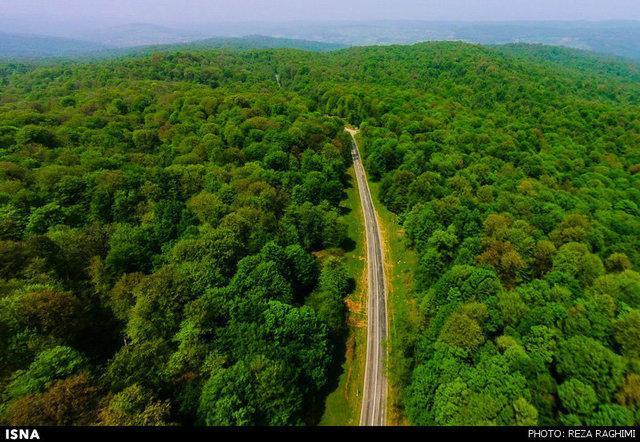 پیدا شدن گردشگران گمشده در جنگل های آستارا