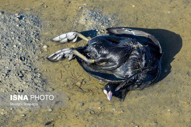 محیط زیست گلستان: مردم از جابه جایی لاشه پرندگان مهاجر خودداری کنند
