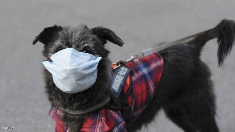 کرونایی شدن یک سگ در هنگ کنگ