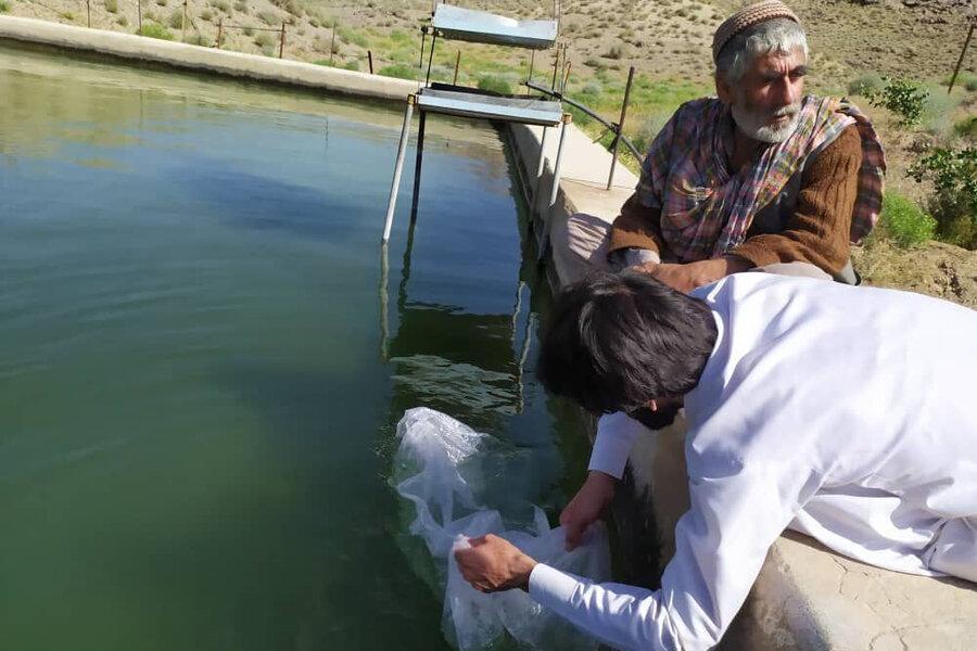 رهاسازی یک میلیون و 700 هزار قطعه لارو در استخرهای ایرانشهر