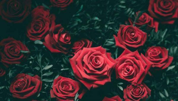 ماسک گل رز، معجزه زیبایی